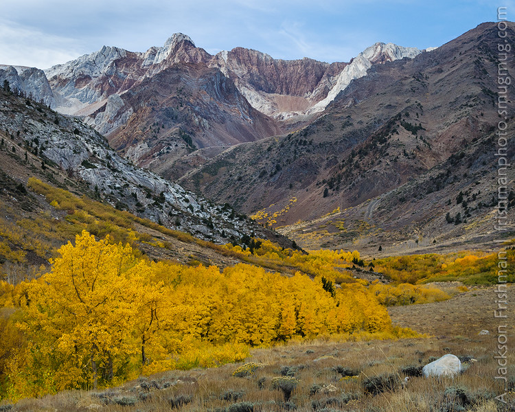 Autumn aspens in McGee Creek canyon, John Muir Wilderness, October 2016.
