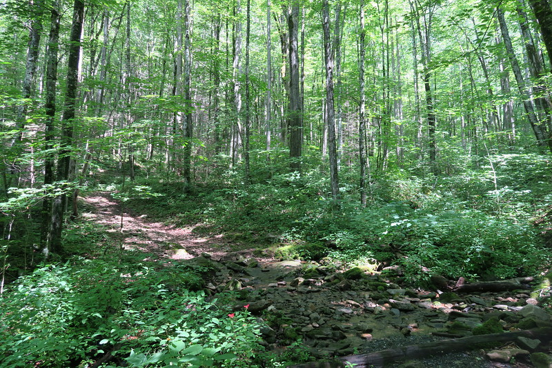 Hyatt Ridge Trail - 3,630'