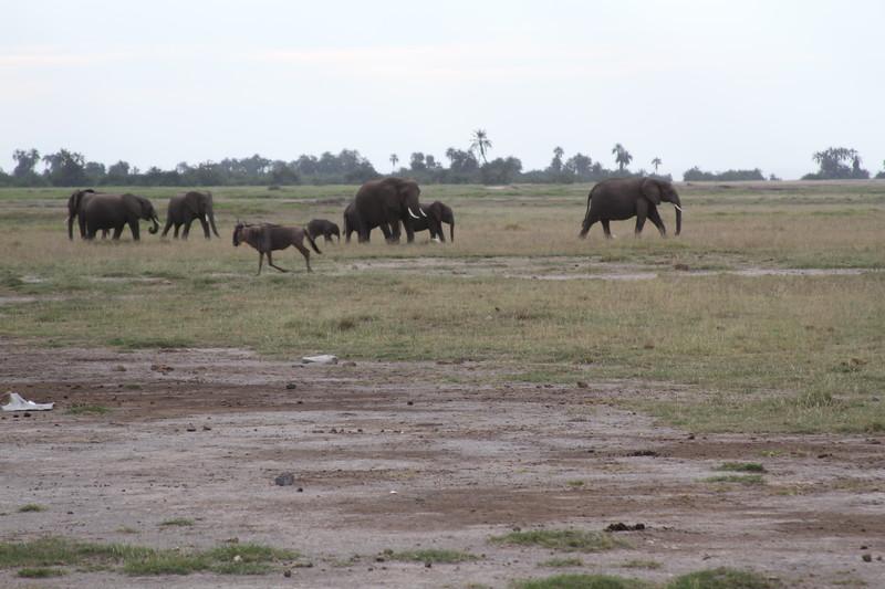 Kenya 2019 #2 296.JPG