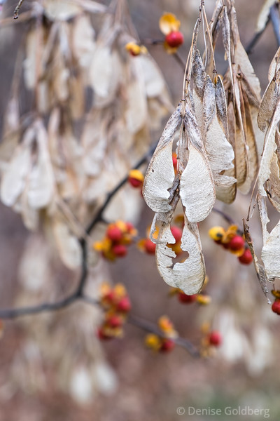 seed pods, faded
