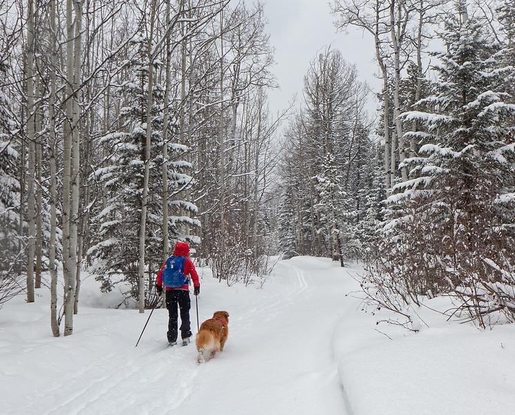 Winter wonderland, Iron Creek trail at West Bragg Creek, March 24.