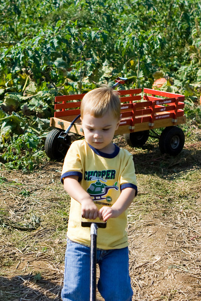 KC is helping to pull the wagon full of pumpkins.