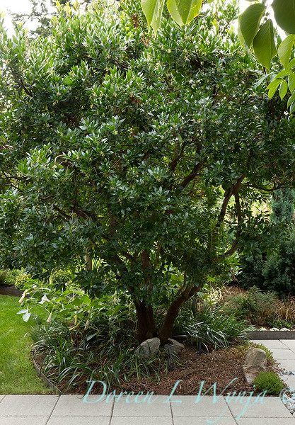 Lisa Bauer - designer's garden_1216.jpg