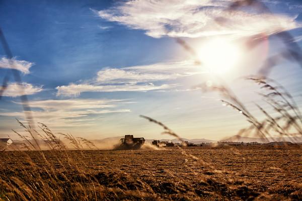 Willamette Valley Harvest