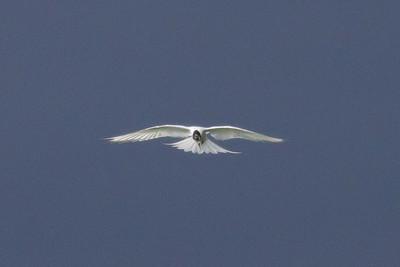 Ireland Birds 2011