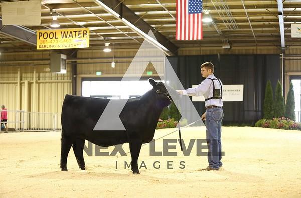ABC 2014 Heifer Ring Shots