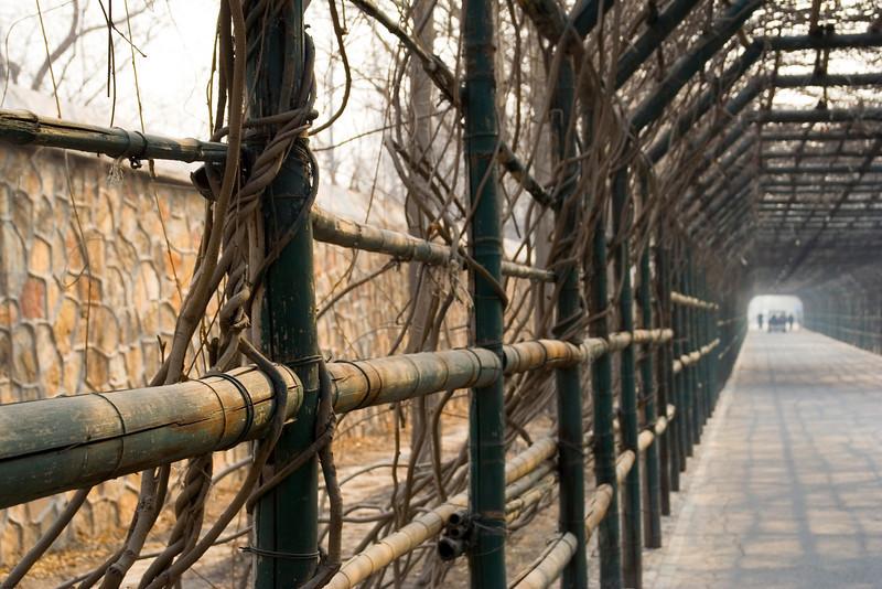 062 Bamboo Fence.jpg
