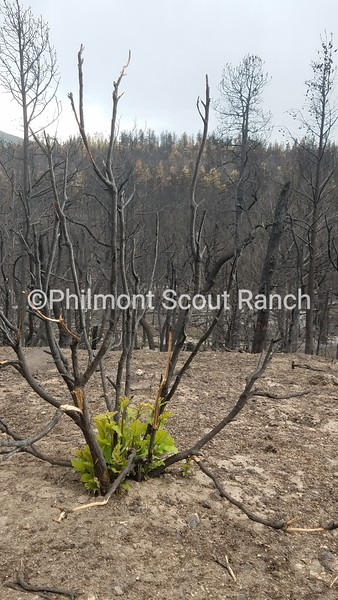 HM_2018_Philmont Recovery Corp_KyraWebster_New Life_Burn Area_630.jpg