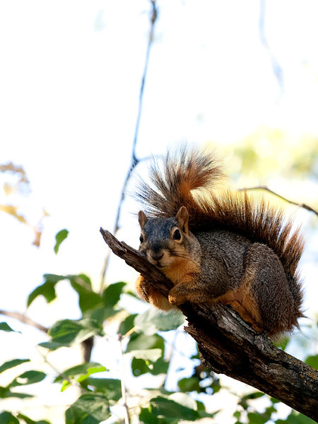 clip-015-squirrel-wdsm-22sep12-001-8347.jpg