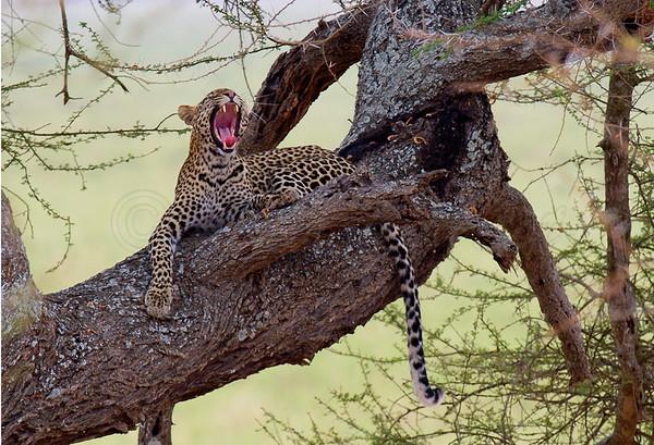 Tanzanian Emotion