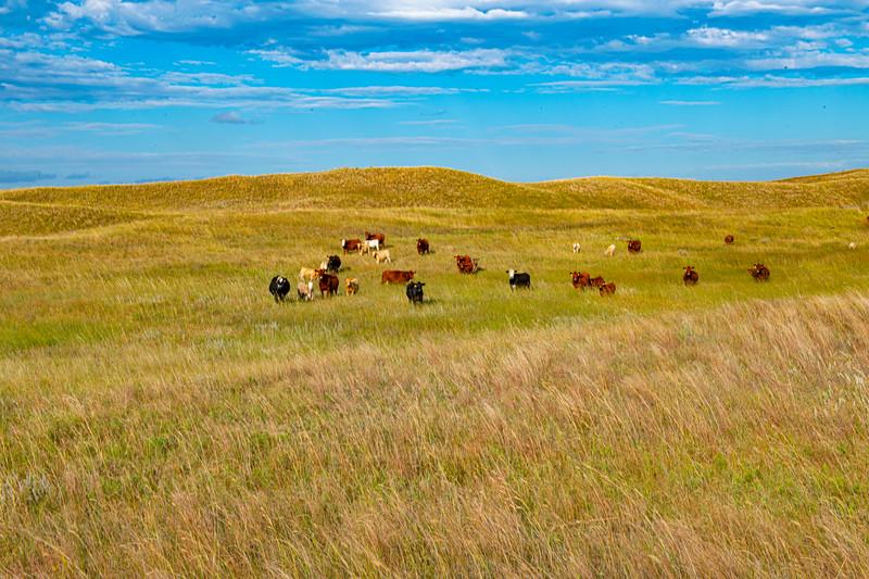 Horn Ranch-1324.jpg