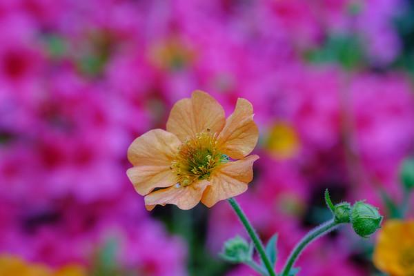 Crockett Flowers Spring 2019