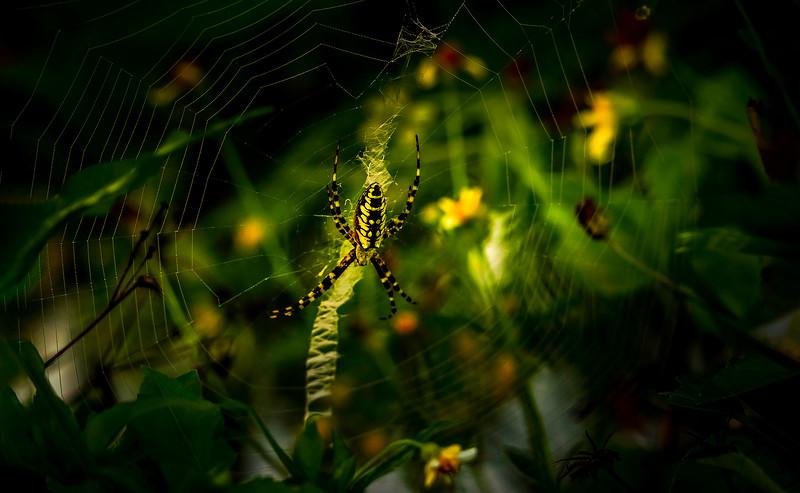Spiders-Arachnids-128.jpg