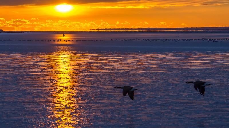sunset dec 29 geese  2017 (1 of 1).jpg