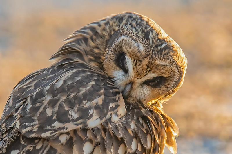 20191105Yolo Owls 11-5-19DSC_5804 copy 2.jpg