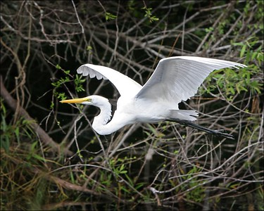Everglades-Shark Valley-2005