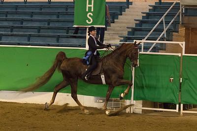 56 - Reg. American Saddlebred 5 Gaited Show Pleasure