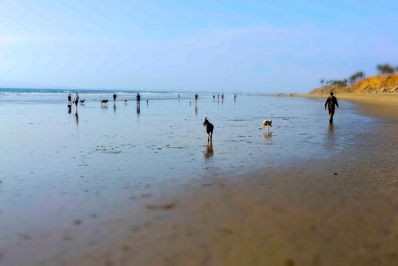 dogs_beach-1.jpg
