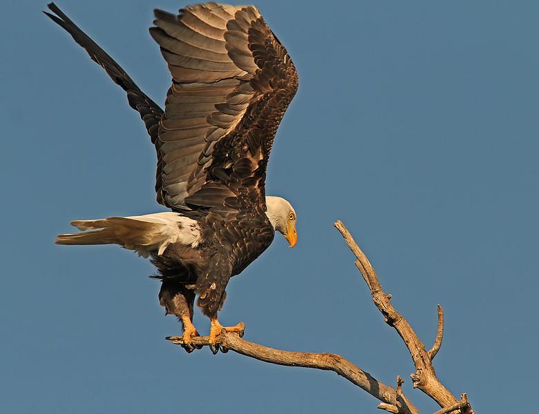eagleliftoff1600neated.jpg