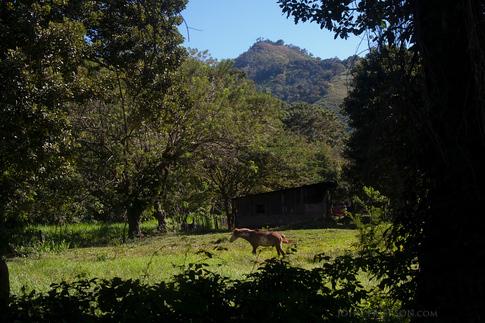 Horse in field, La Reyna, Nicaragua