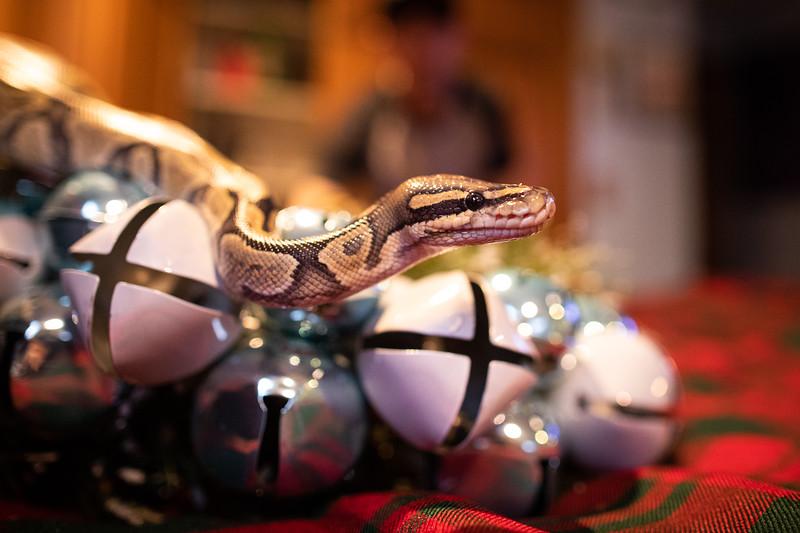 ChristmasSnakes19_0023.jpg