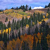 Guardsman Pass Foliage