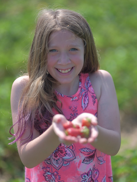 June 17, 2018 - Strawberry Picking for Fathers Day-218.jpg