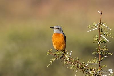 Pilanesberg Birds July 2018