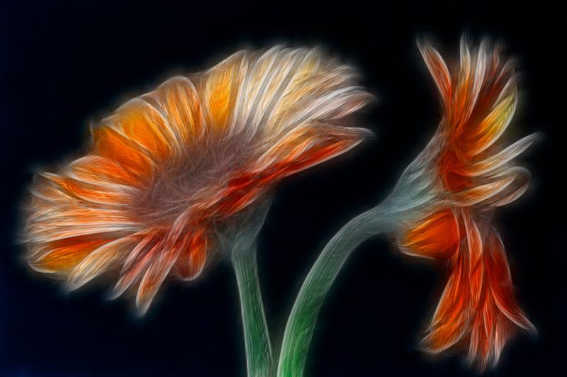 Sparkling flowers.jpg