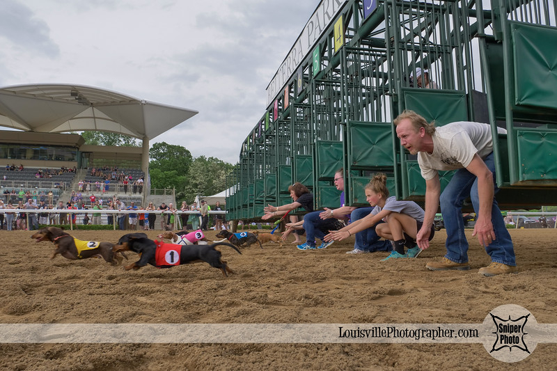 Belterra Park 2017 Wiener Dog Races-20.jpg