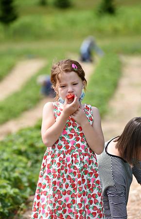 Clear Brook Farm strawberry picking - 061821