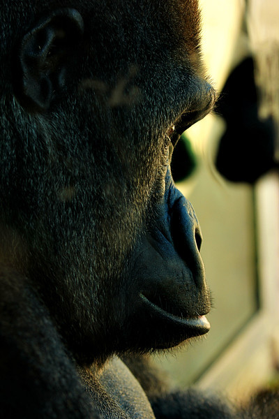 Philadelphia Zoo 456-2.jpg