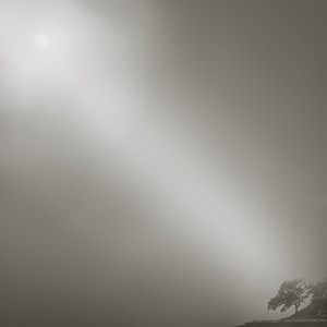 Steve Hilton - Morning Fog