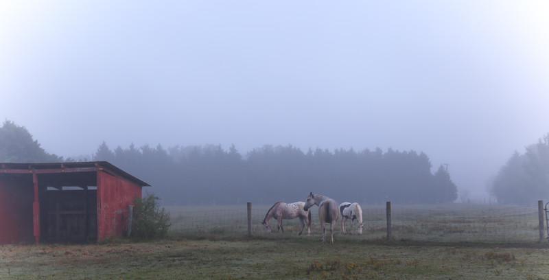 foggy sundance morning-1.jpg
