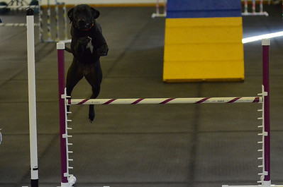POTC AKC Novice Agility Trials - March 10-11, 2012