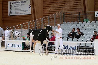 Expo Bulle Holstein Junior Cow