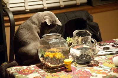 The Cats and the Fish Bowl
