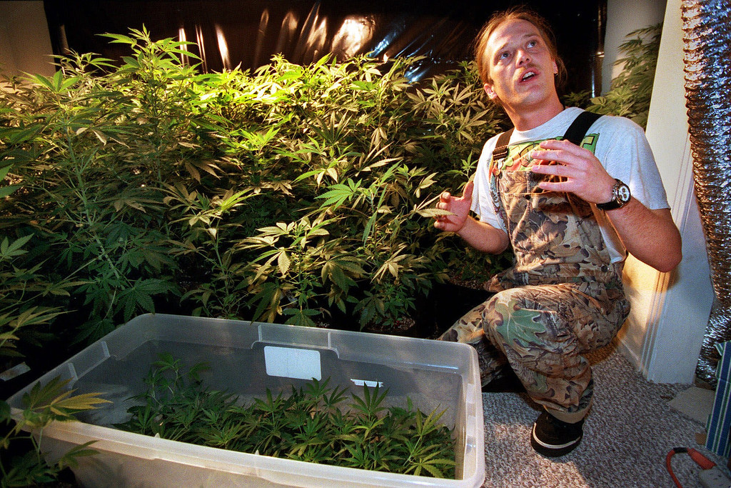 . Humboldt Cannabis Center horticulturist Steve Tuck gestures beside both mature and baby marijuana plants he is growing for medical users of the drug, March 29, 1999, in Eureka, Calif. Arcata police chief Mel Brown personally issues photo identification cards bearing his signature to people who voluntarily register as medical marijuana patients, after meeting with them and checking to confirm they have a doctor\'s recommendation. (AP Photo/Ben Margot)