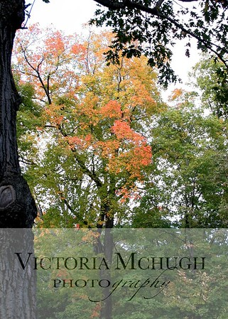 10-10 fall color (9)-