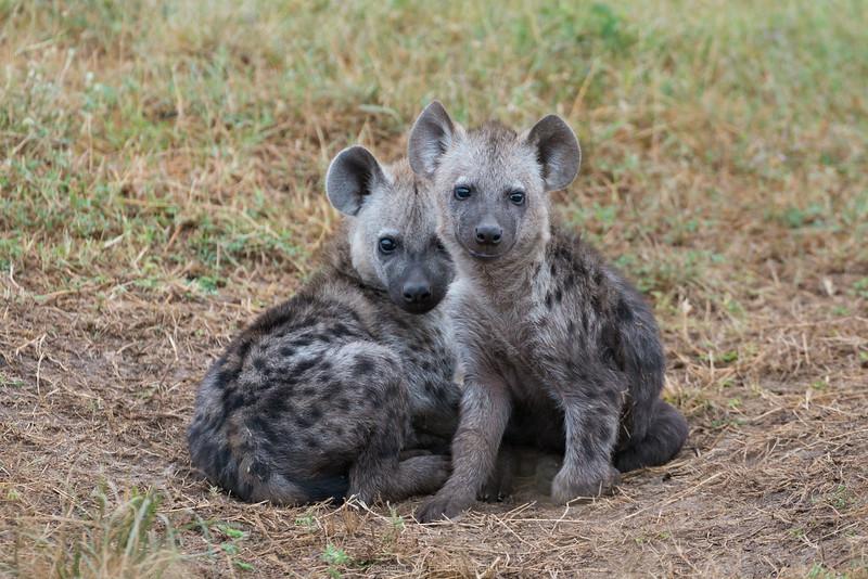 February - Masai Mara
