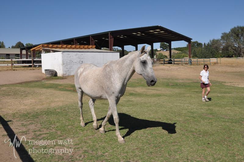 EB&Horses-074.jpg