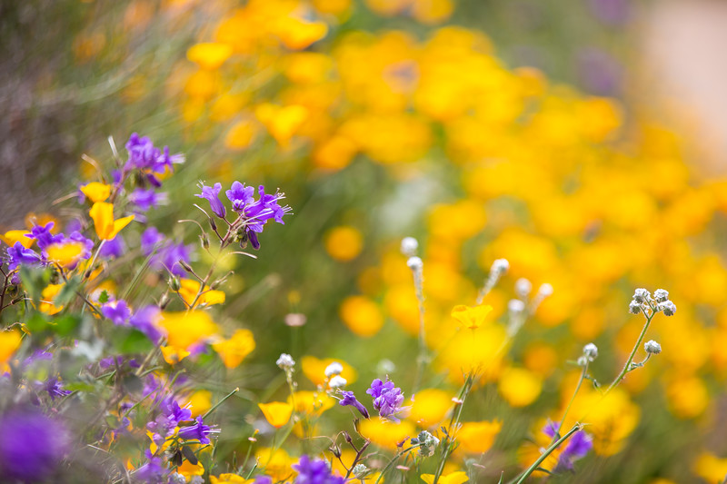 Spring Flowers B-147.jpg