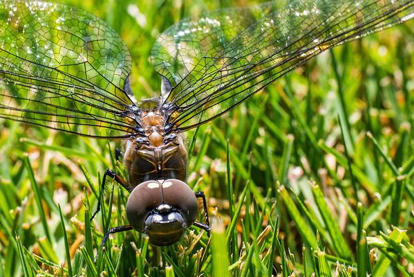 Dragonfly? Hi-Res • May 24, 2015