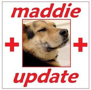 MADDIE UPDATE