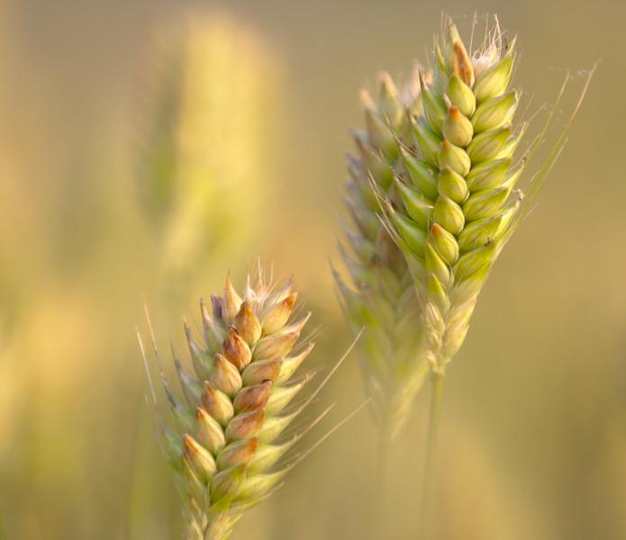 crops 4877-4877.jpg