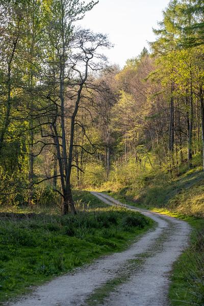 Aldfield walk 24 Apr 2020-13.jpg