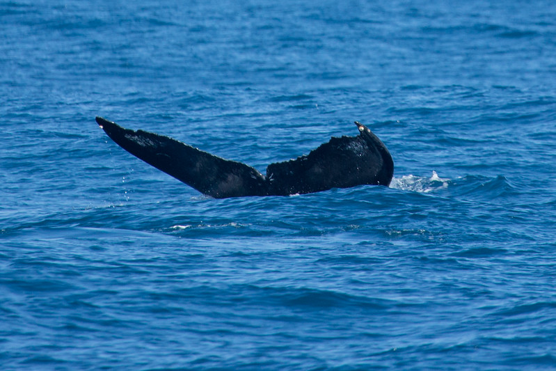 whales-leila-8.jpg