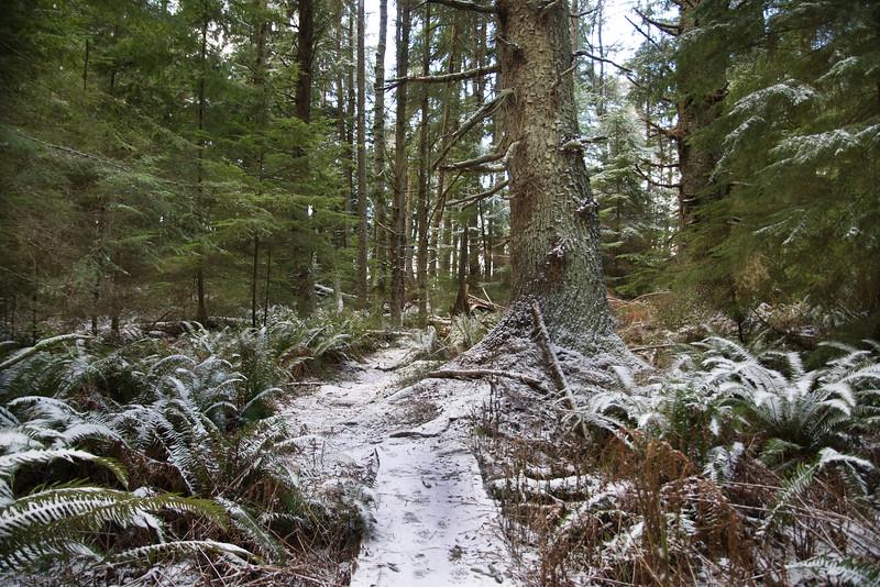 DSC_1091 Fern trail snow 1.14.20.jpg