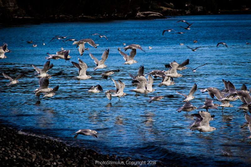 seagulls (1 of 1).jpg
