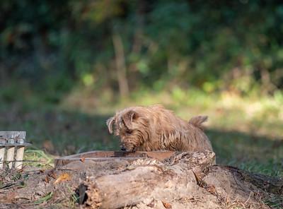 Eareth Dog Trials